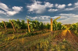 wine-428042_640